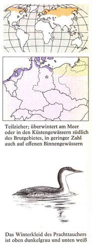 BiHU Vogelführer Prachttaucher Natur