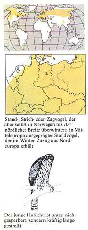 BiHU Vogelführer Habicht Natur