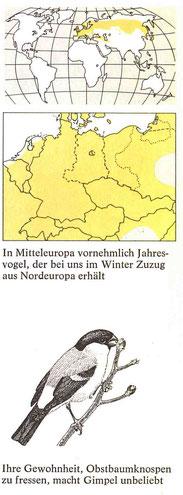 BiHU Vogelführer Gimpel Natur