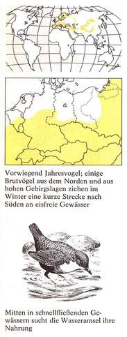 BiHU Vogelführer Wasseramsel Natur