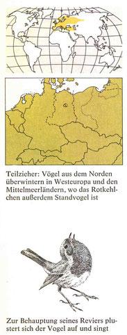 BiHU Vogelführer Rotkehlchen Natur