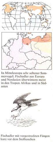 BiHU Vogelführer Fischadler Natur