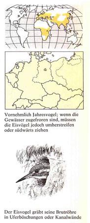 BiHU Vogelführer Eisvogel Natur