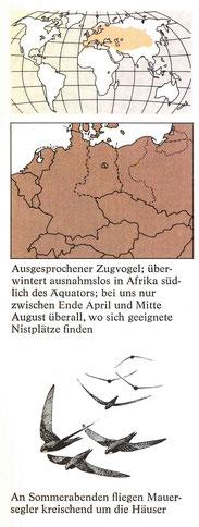 BiHU Vogelführer Maursegler Natur