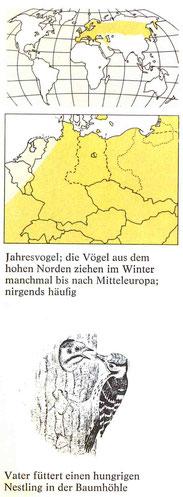 BiHU Vogelführer Kleinspecht Natur