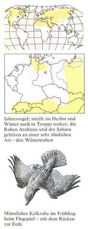 BiHU Vogelführer Kolkrabe Natur