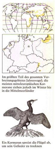 BiHU Vogelführer Kormoran Natur