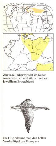 BiHU Vogelführer Graugans Natur