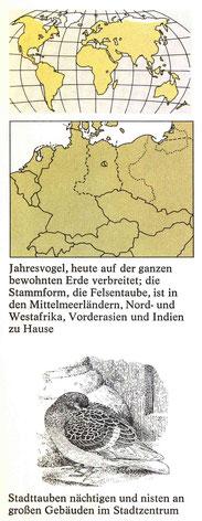 BiHU Vogelführer Stadttaube Natur