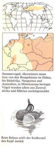 BiHU Vogelführer Knäkente Natur