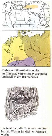 BiHU Vogelführer Tafelente Natur