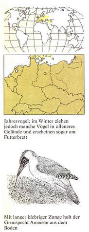 BiHU Vogelführer Grünspecht Natur