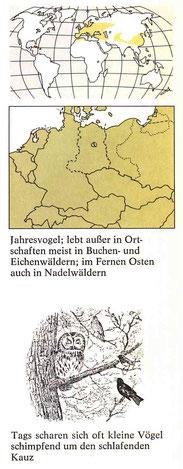 BiHU Vogelführer Waldkauz Natur