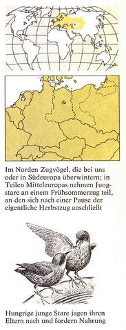 BiHU Vogelführer Star Natur