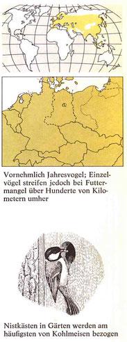 BiHU Vogelführer Kohlmeise Natur