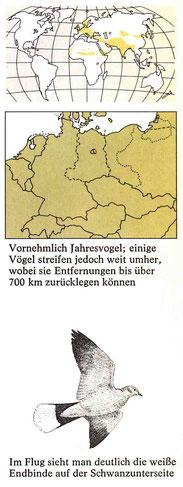 BiHU Vogelführer Türkentaube Natur