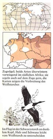 BiHU Vogelführer Schwarzstorch Natur