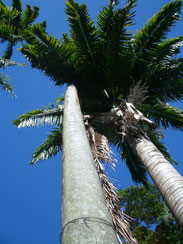 Palmen blauer Himmel Traumreise