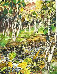"""""""Birken im Moor"""", Aquarell und Ölkreide, 61 x 46cm, 2015"""