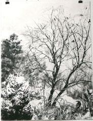 """""""Walnussbaum im Garten"""", Reißkohle, 61 x 46cm, 2015, verkauft"""