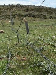 8 - Vandalisme des bergers (2014). Où sont les gardes ?