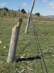 7 - Saccage des clôtures en toute impunité (2014)
