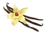 Bourbon Vanille, Vanille Lebensmittelaroma, Vanille zum verfeinern, Vanillegewürz