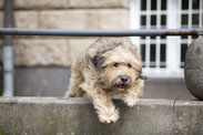 Berliner Stadthunde, Hundeschule, Hundetagesstätte, HuTa, Hundetrainer, Simone Laube, fotografie Anke Peters, Rückruf