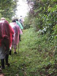 Auch Regen hatten wir im Regenwald!