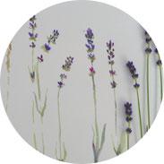 Inspiration - Lavendel und Gräser skizzieren - DIY