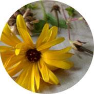 Art Journal - Mein Gartenjahr - September - DIY