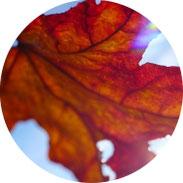 Inspiration - Gedicht von Rainer Maria Rilke - Herbst