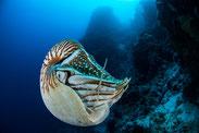 www.ronaldosephius.nl nautilus zee blauw Bewust groeien vanuit innerlijke kracht