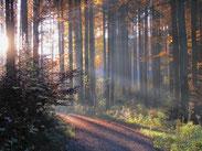 Waldspaziergang 2011