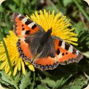 Artenvielfalt & Ökologie