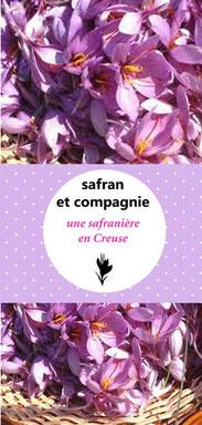 culture de safran en Limousin