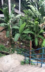Santa marta, rio de janeiro, favela, aufstieg, müll, brasilien