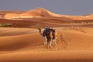 Erg Chebbi, Marokkos höchste Sanddüne bei Merzouga.