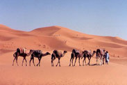 Erg Chebbi, Marokkos höchste Sanddünen.