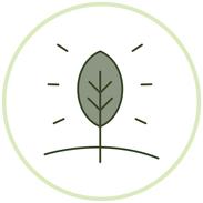 Gesundes Pflanzenwachstum