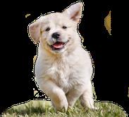 Hundeschule Bremen - Ihre Hundeschule MOMO - Hundeführerschein