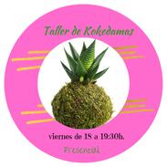 Círculo de kokedamas