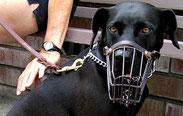 Toutou sur le chien : Méfiez-vous des contrefaçons
