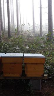 Mystische Herbststimmung im Pitzenbergerwald