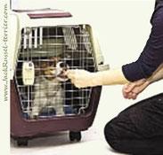 Приучение щенка к клетке