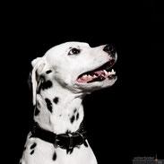 Individuelles Hunde-Fotoshooting vor Ort