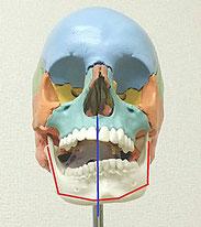 あごのズレ、顎関節症の原因