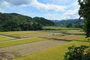 北袋の近くで撮影した稲刈りの様子