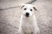 addestramento cani , addestramento cane , educazione cani , corso agility dog , corso per cuccioli , agility dog viareggio , addestratore cinofilo ENCI , centro cinofilo , rally obedience , socializzazione , massarosa , camaiore , pietrasanta , lucca