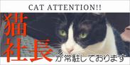 ホワイトターラには猫社長がおります。猫アレルギーの方はご遠慮ください。